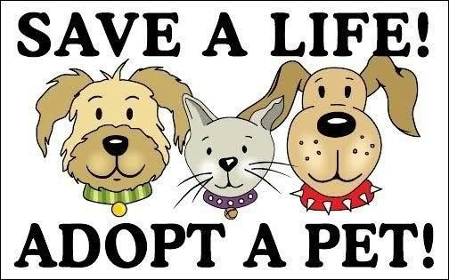 National Animal Shelter Appreciation Week Free Adoption List Of Dogs